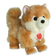 Hermann Teddy Pomeranian dog